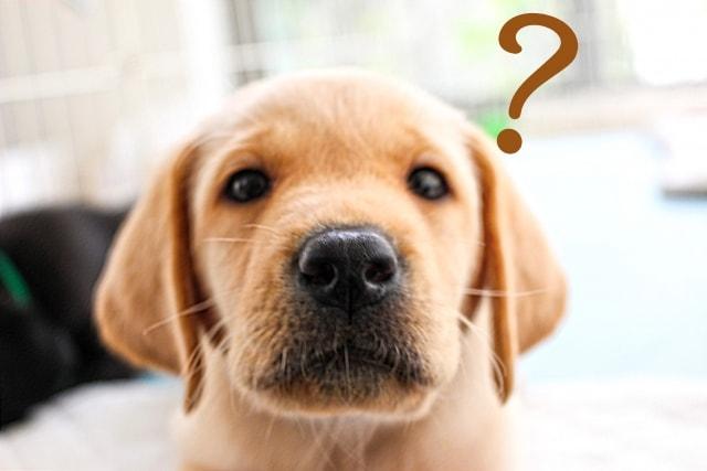 困っている犬の写真
