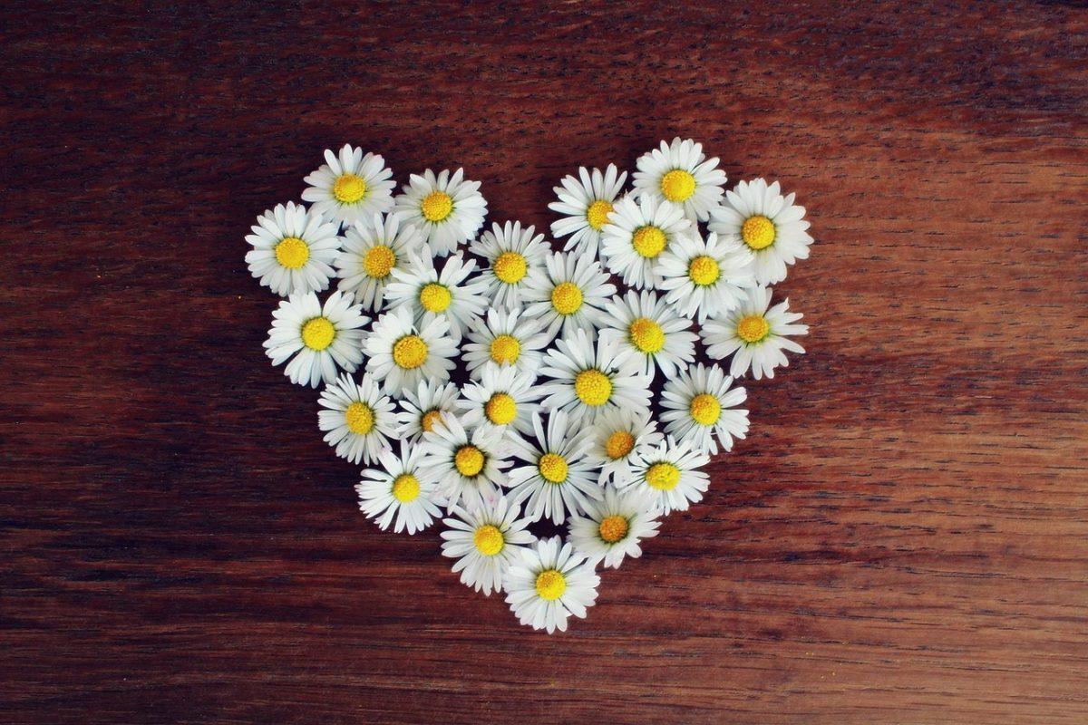 信頼を象徴する花