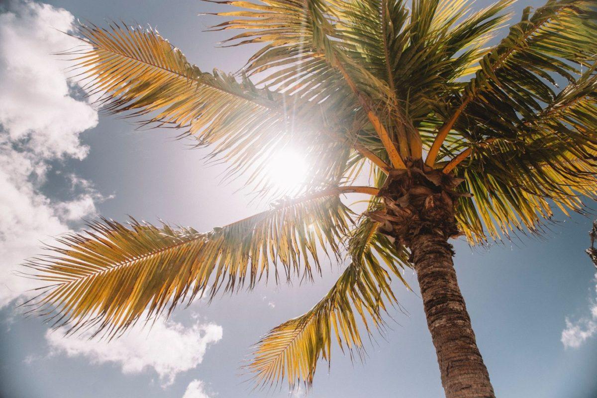 太陽が強く輝く写真