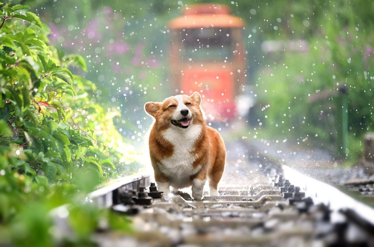 すっきりした犬の画像
